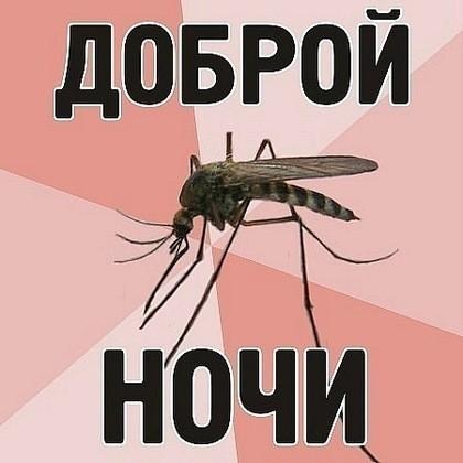 Простая ловушка от комаров своими руками (Инструкция)