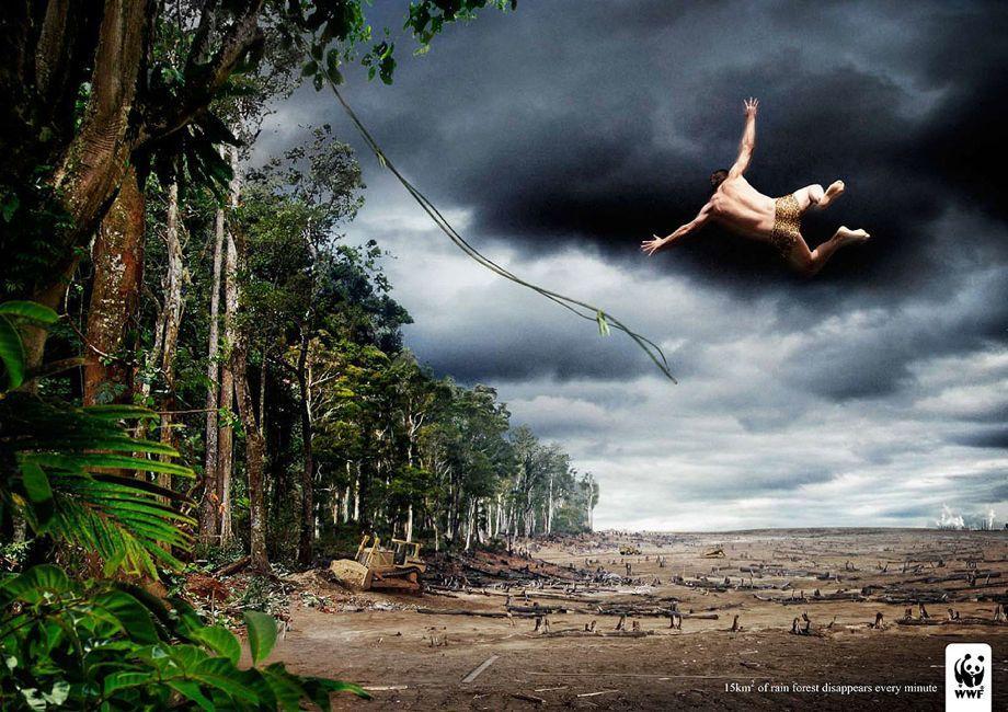 """""""Каждую минуту исчезает 1,5 кв. км тропического леса"""". Всемирный фонд дикой природы"""