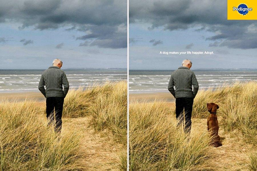 Собака сделает вашу жизнь счастливее. Возьмите собаку из приюта
