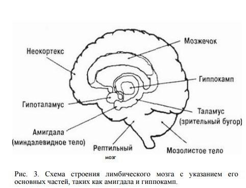 Лимбический мозг
